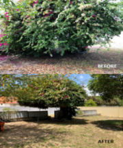Perth Garden Maintenance and Cleaning Services