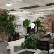 Transform Your Residental Area with beautiful indoor plant hire