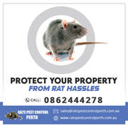 Protect Your property From Rat Hassles