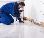 Reliable and expert technicians for pest control in Camberwell